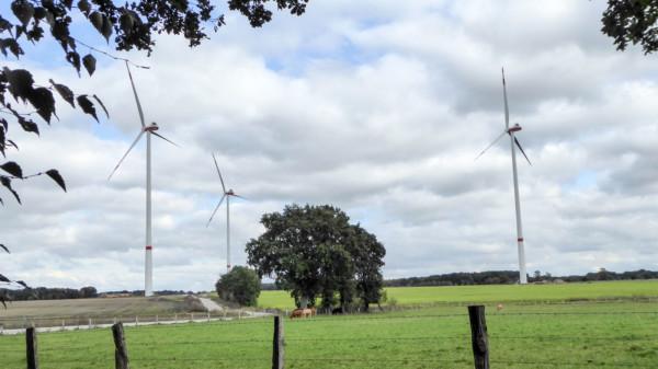 Blick auf den neuen Windpark